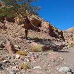 Die Wüste ist genial